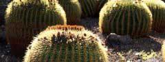 Cactuses, Canary Islands free javascript slider