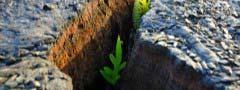Plants javascript image slideshow code