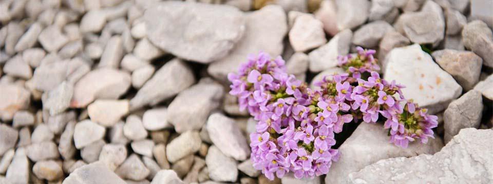 Beautiful flowers  image slider jquery