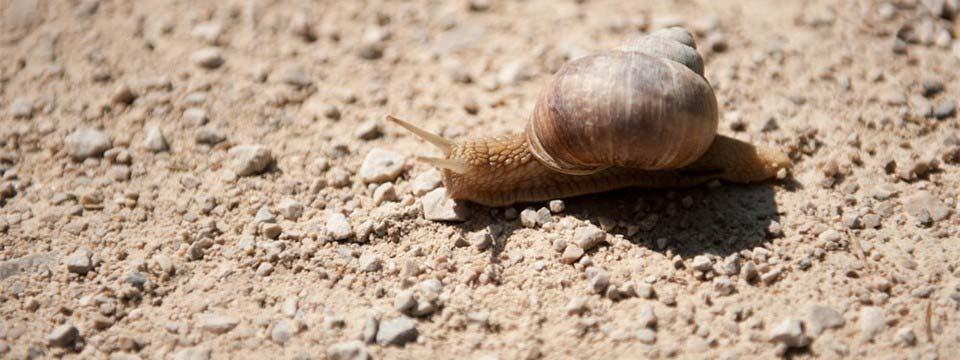 Snail jquery slider image
