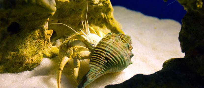 Hermit crab photo gallery html5