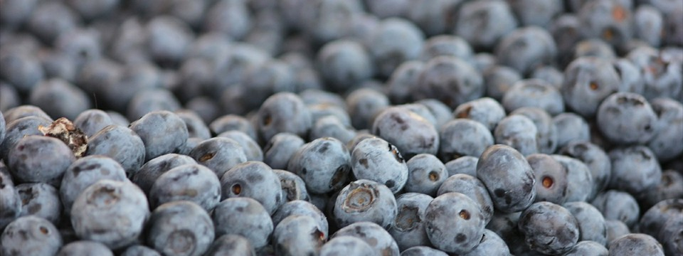 Blueberry css3 image slider