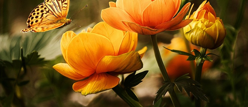 Flower and Butterfly : free full screen slider