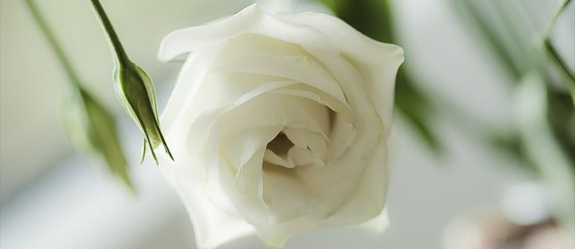Rose : slider full screen