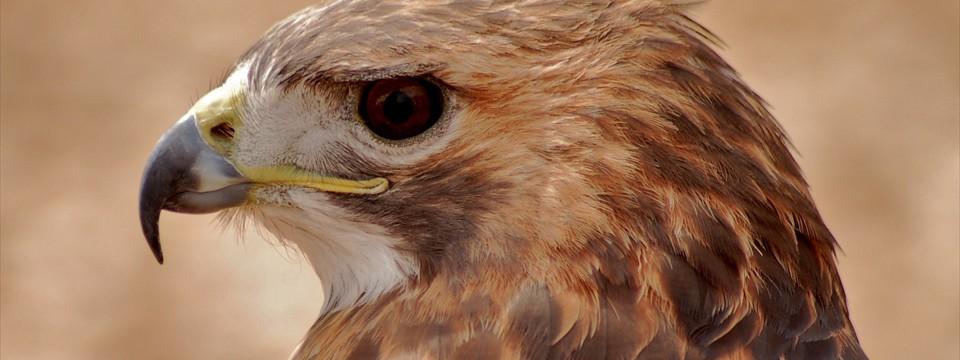 Hawk : slider bootstrap